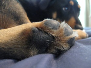 his furry toes are pretty cute too.