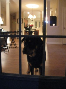 Finley inside watching us grill